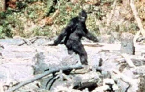 Big Foot Legend Continues to Enthrall