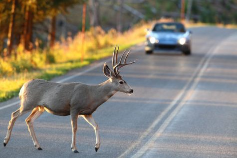 OH DEER: According to the LA Times, over 350,000 deer are killed on America