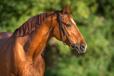Spend Quarantine Time on Horseback