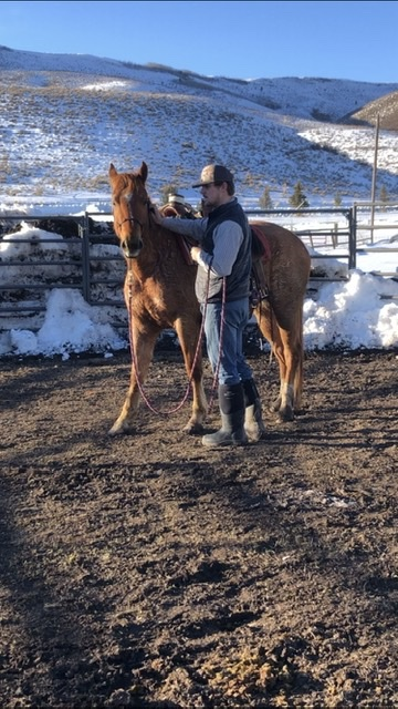 BREAKING HIM IN: Senior Gabe Nield saddles his colt in the spring sunshine.