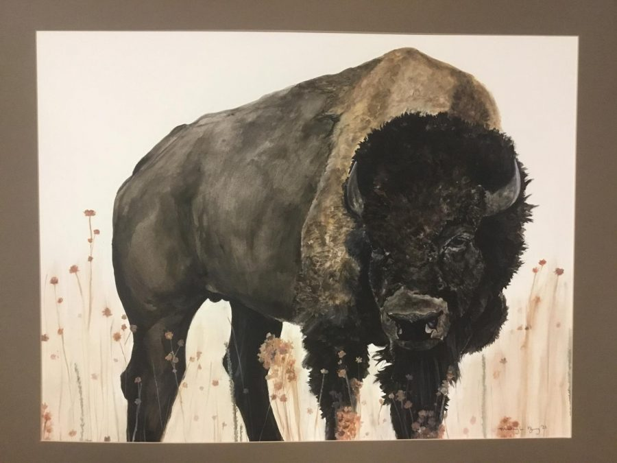 BIG MONEY: This buffalo painted in under 4 hours by McKayla Brog was actioned off on the Star Valley High School Facebook page to help with medical bills for Ethan Nelson. The $1300 made by the painting went towards other money raised to help Nelson who was injured during a soccer match against Jackson.